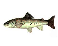 Рецепт кулебяки с рыбой
