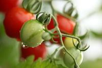 Рецепт овощной икры.