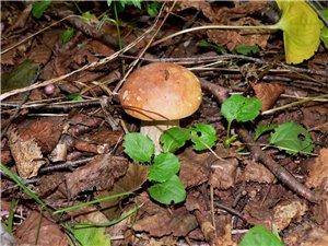 Приготовление блюд из грибов.